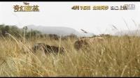 《奇幻森林》中文片段 虎豹刺激恶斗