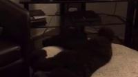 每天晚上,汪星人听到电视关机的声音就睡觉去了