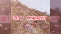 蔗宜香原生态红糖黑糖总代微信:125824617