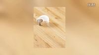 山西欧诺尔自热地砖复合型水暖地板地址在哪里