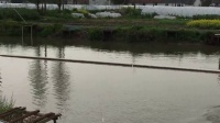 夏氏巨物霸.鲟5.4米钓杆,120+成功上岸