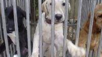 为什么怀孕不能养狗?