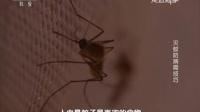 走近科学 2016 灭蚊防病需技巧 160425