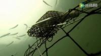 水下实拍钓螃蟹全过程,可算看清楚螃蟹是怎么上钩的了!