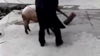 你怎么能这样杀猪不用刀 687699703