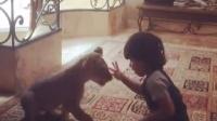 和狮子从小一起玩的熊孩