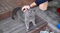 超萌~小猫需要抓抓痒