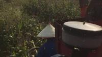 冀新牌三行穗茎兼收玉米收割机
