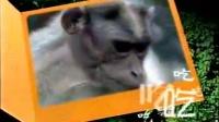 保护动物公益广告