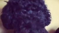 好嗲的小杏仁眼#宠物#|尼尼哥黑熊妹