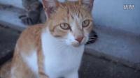 福冈的猫之岛-相岛