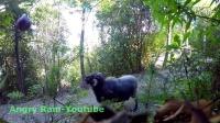 在森林里放一个绳球会发生什么?