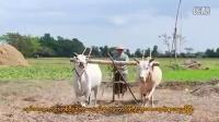 myanmar(အေကာင္းဆံုးအ႐ံုးသမား မေနာ) လမင္းေမာင္ေမာင္ (ပုလဲ)