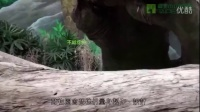 团团行为丰富化 Giant Panda Tuan Tuan's Behavior Enrichment