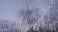 济南趵突泉上空现万鸟朝阳奇观 美得像画一样—在线播放—优酷网,视频高清在线观看