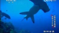 金雕 双髻鲨 蝙蝠 超能力大比拼 130309