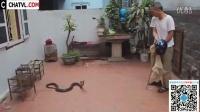 【大雄学堂】大爷在自家后院发现条眼镜蛇,接下来他的举动让人佩服无比!