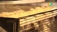 你爱吃的薯片是怎么做出来的?这次告诉你答案!