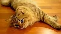 喵小姐的叫声很销魂 刚睡醒的猫咪么么哒[高清]