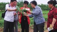 视频: 北京榜样主题活动官网-张涛:豌豆女王的诚信经