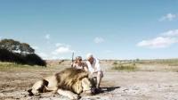 實拍:男女獵殺獅子拍視頻炫耀,不料遭身後雄獅偷襲