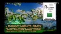 大樱桃病虫害防治实用技术樱桃树种植技术--爱华免费植保视频