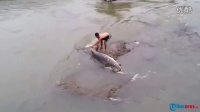 河水退潮后露出一条上百斤的鱼王,小伙去捡,发现比他的人还大
