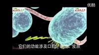 益生菌是最好的药二十八添益生菌悠家总代15008023863
