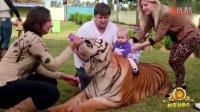 刺激!一家人与7只老虎同吃同住!