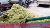 玉米秸秆制造面包草的机械鑫绿金面包草制作机械