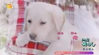 《神犬小七2》狗狗小七宣传片