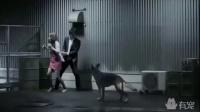 破解亚洲三大邪术,只需要一条狗