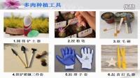 多肉植物的种植-徐湾湾视频