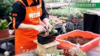 特力屋DIY酵合盆栽-多肉植物组合盆景_超清视频