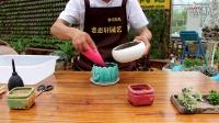 恋恋轩园艺多肉植物种植全过程,教您如何种多肉视频