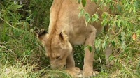 野性非洲 自然传奇 160721