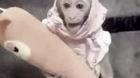 宠物猴袖珍石猴多少钱一只