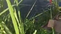 爱易达——随便6.3米钓获20斤黑鲩。