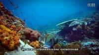 科莫多海底探险之旅