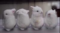 【发现最热视频】流氓兔偷亲心上兔,羞成了一杯牛奶,好萌!