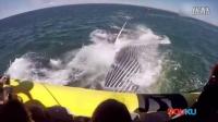 实拍加拿大巨型鲸鱼直扑小船 游客尖叫连连