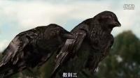 乌鸦偷吃玉米,结果被稻草人吓跑,好可爱