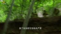 730剧场《希望使命》全国首播  宣二