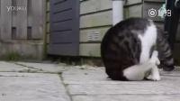 有只猫不小心翻了个前空翻,然后。。。
