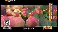 桃子品种多 挑选存放 有新招 160817