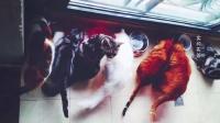 [预告]家有七猫 猫是我的表演课老师160824