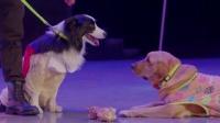 《神犬小七 第二季》洛奇想给小七玛丽用狗语翻译器