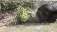 动物们兽性大发,攻击人类的惊险视频集锦