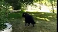视频: 牛牛的鬼步舞1030_6c2ea734f379449fa360302a077ea77c.f20
