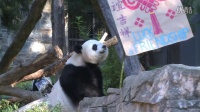Smithsonian's National Zoo Celebrates Giant Panda Bei Bei's First Birthday